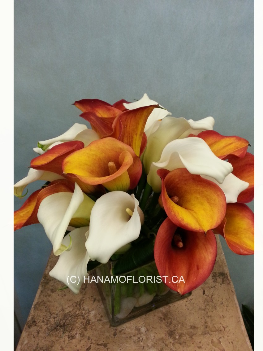 CUBE720 Seasonal Calla Lilies in 5 inch glass cube