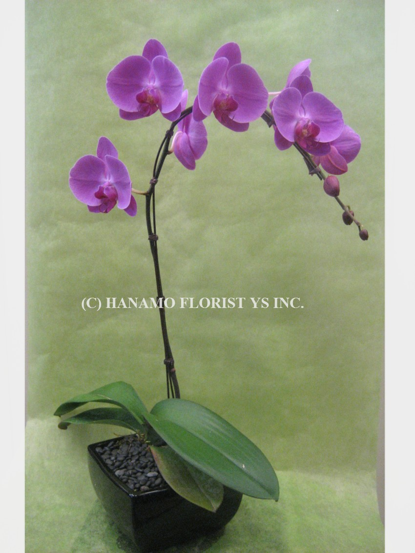 ORCH016 Pink/Purple Orchid in a Ceramic Pot Zen Style