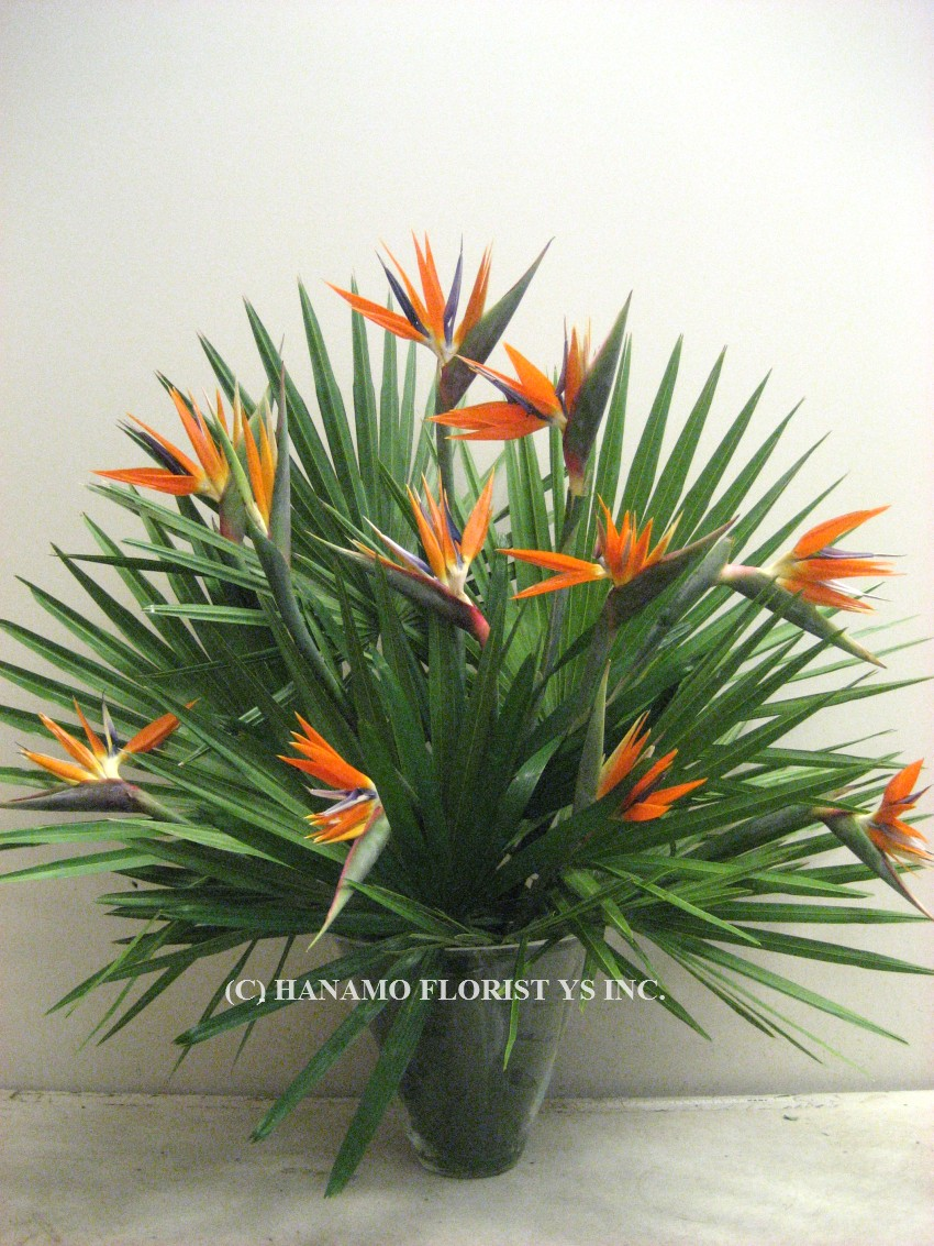 LOBB806 Birds of Paradise Arrangement in Glass Vase