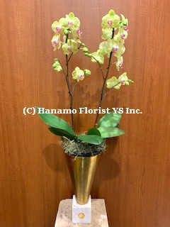 ORCH710 SALE - 2 Orchids in a decorative Gold Metal Vase