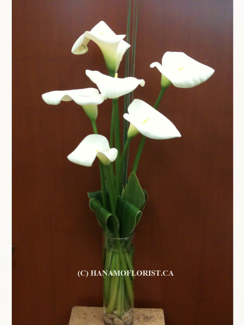 VASE504  6 Local White Calla Lilies in Vase (Opened)