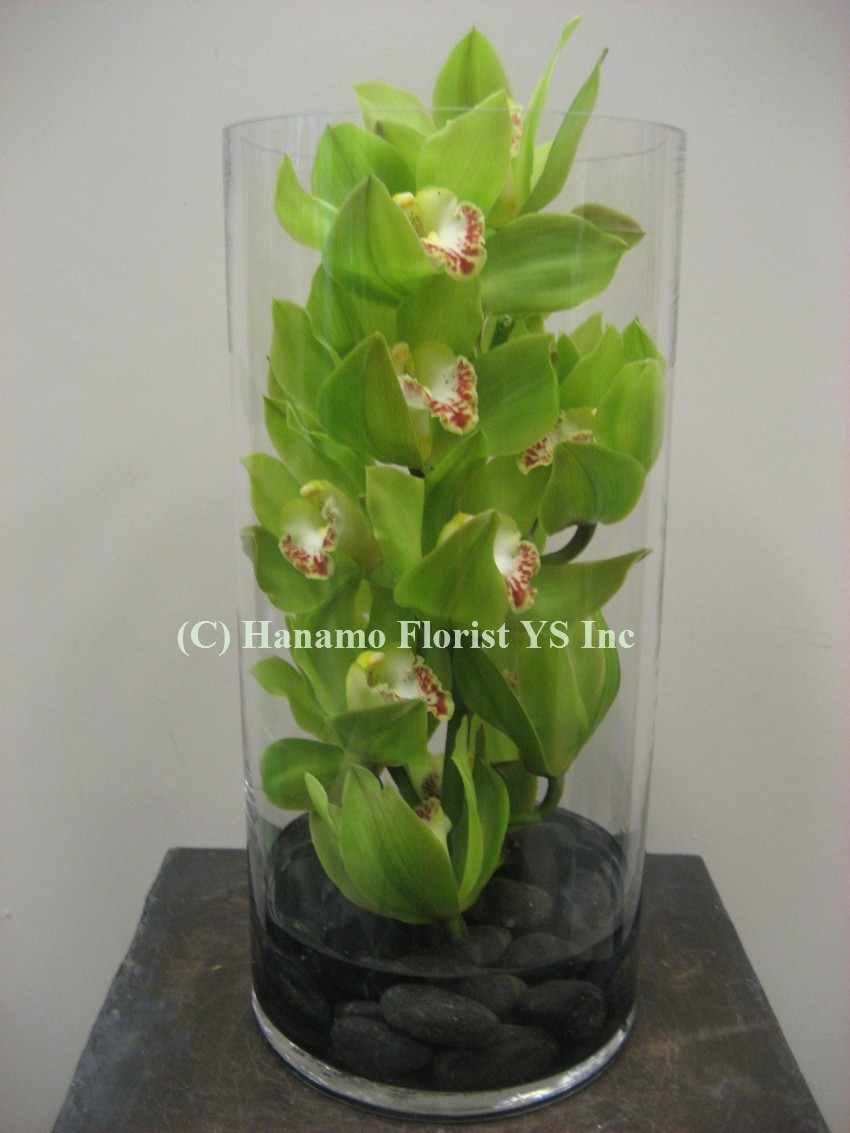 MODE000 Cymbidium Orchids Large in a Tall Glass Vase
