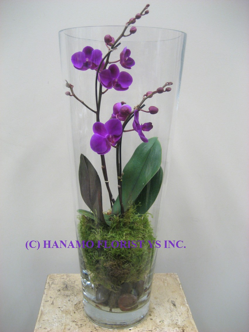 ORCH014 Orchid in the Tall Glass Vase