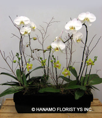 ORCH006 Large Orchid Planter